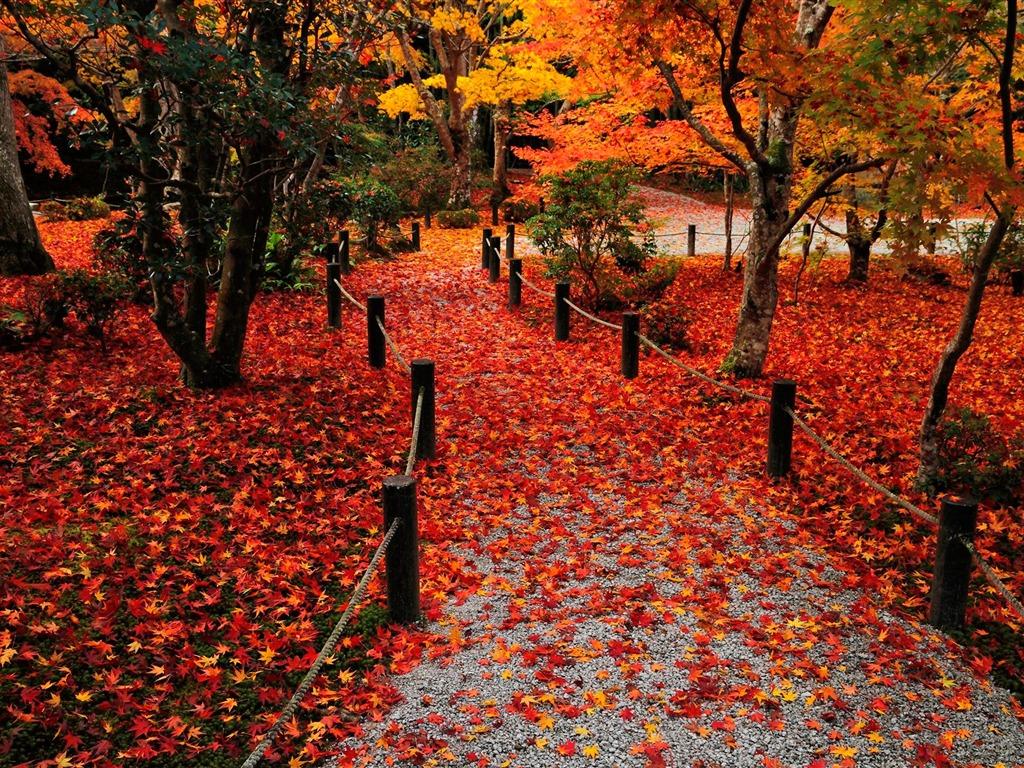 Colorful autumn leaves-Enkoji Temple Autumn wallpaper ...