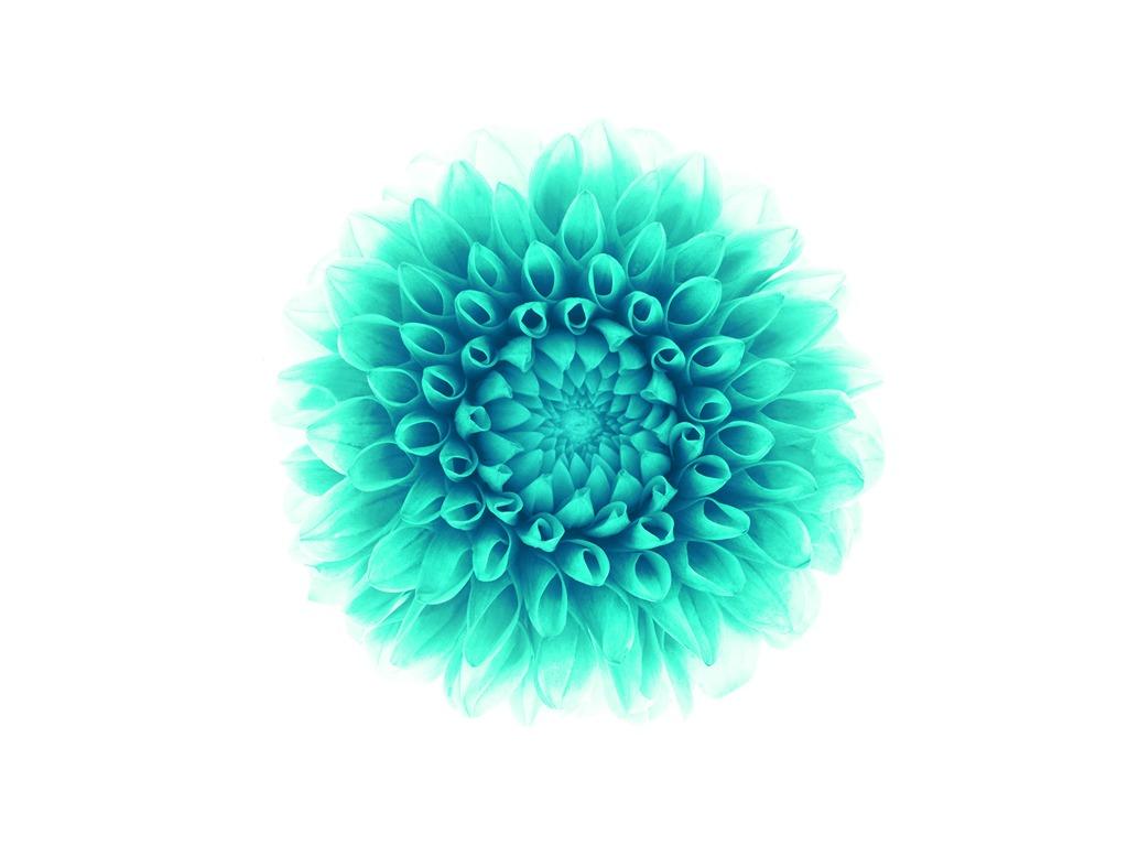 緑の花-Apple IOS8 IPhone6 Plus HDの壁紙プレビュー