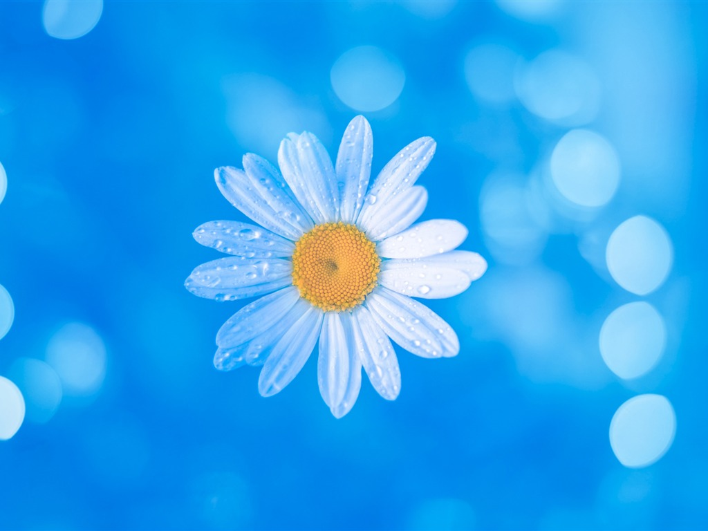 Bokeh Wallpapers High Quality: Chamomile Blue Bokeh-2017 High Quality Wallpapers Preview
