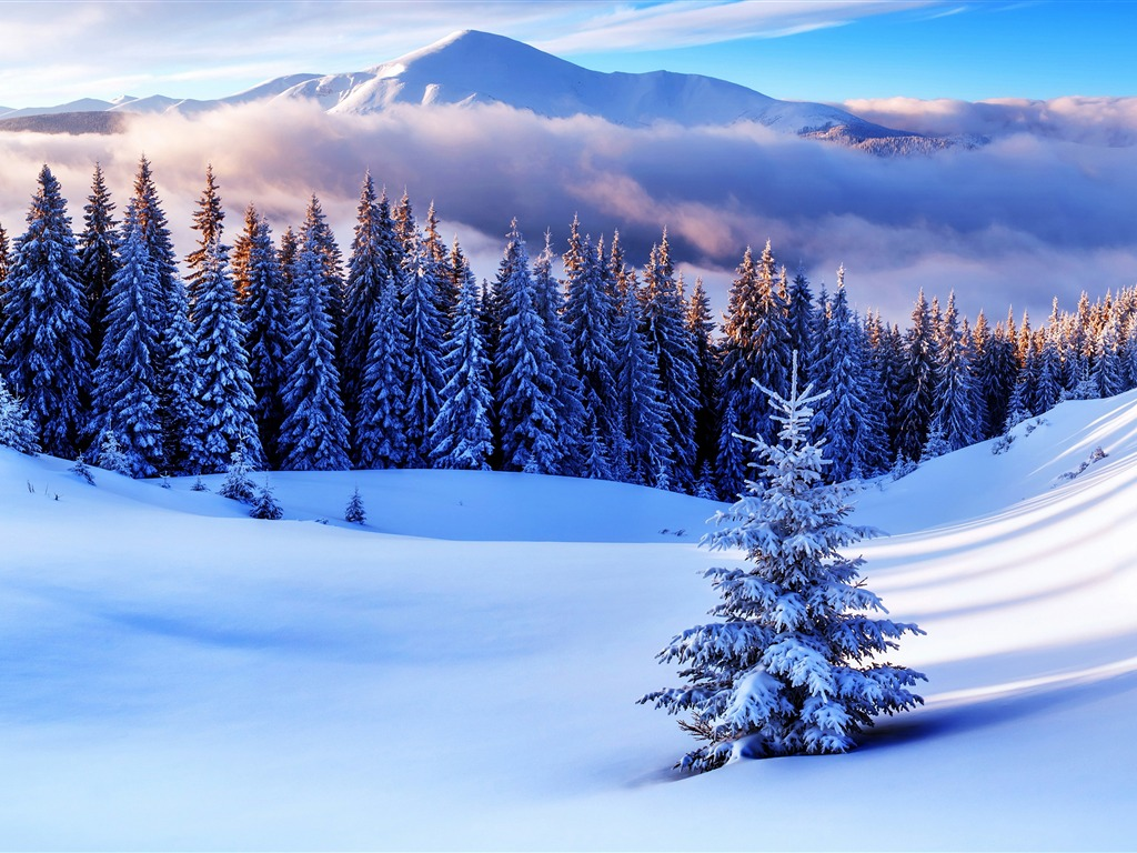 Winter Forest Snowy Pine Tree Sunset Preview 10wallpaper Com