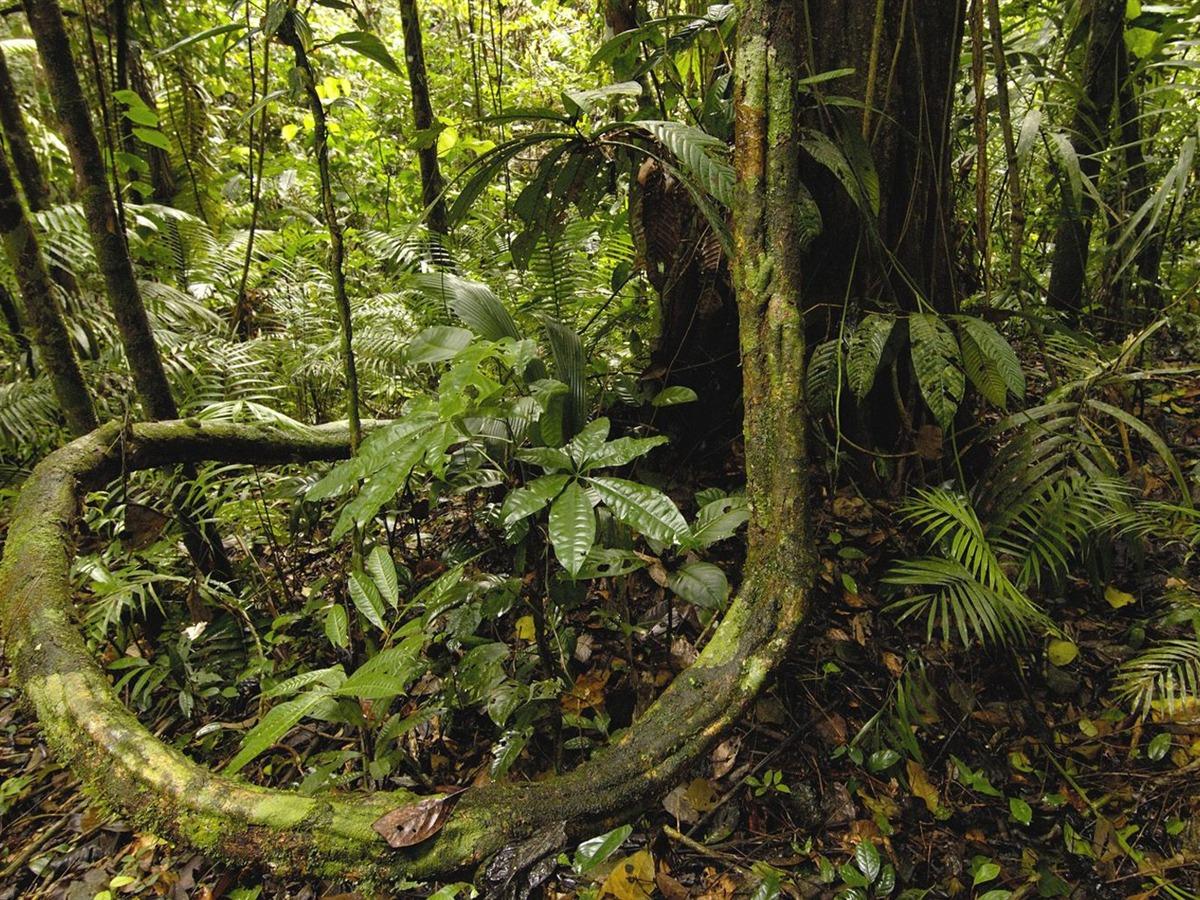 画像 : 熱帯雨林 壁紙 まとめ - ...