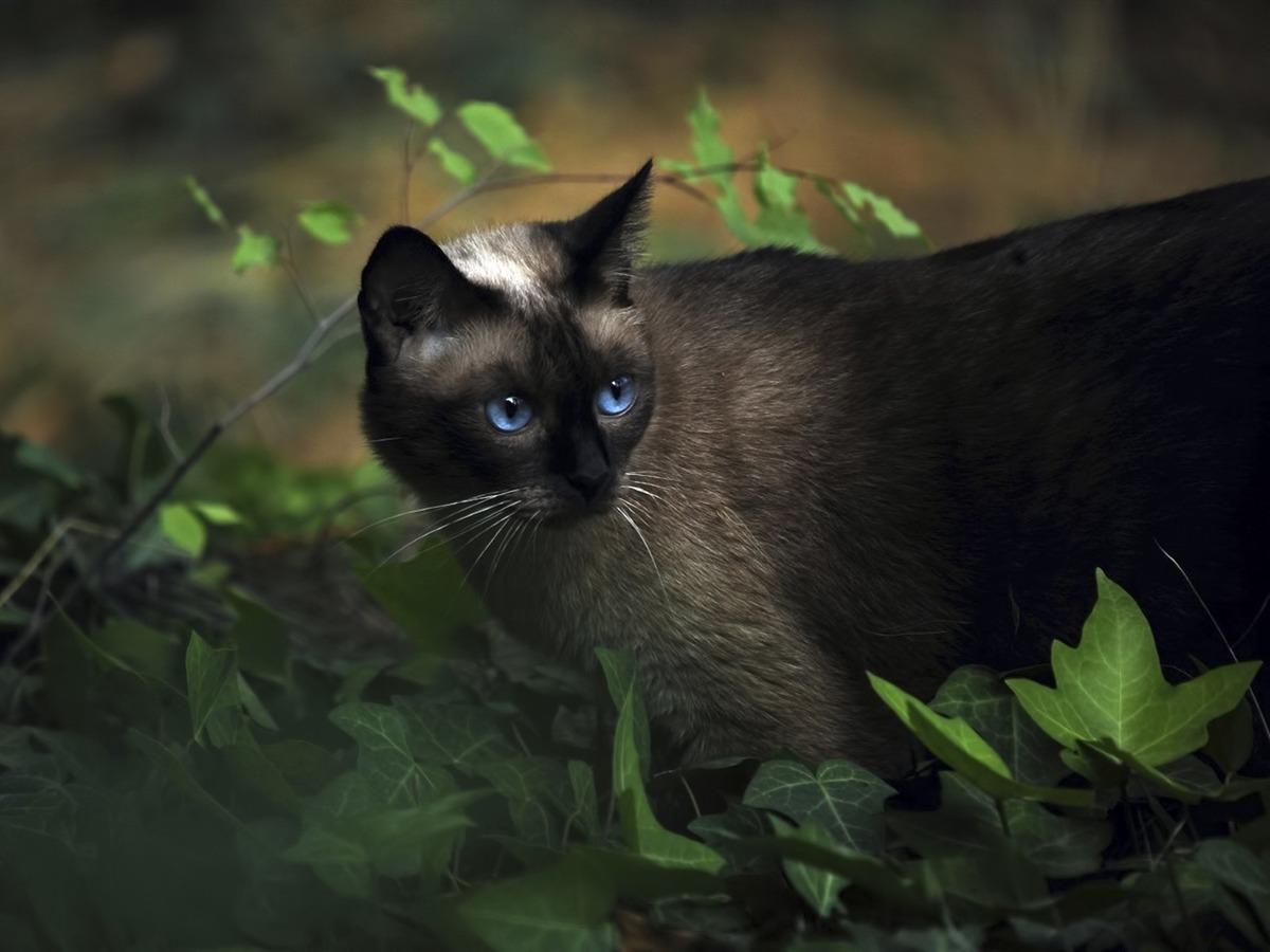 jolie chatte black la chaux de fonds