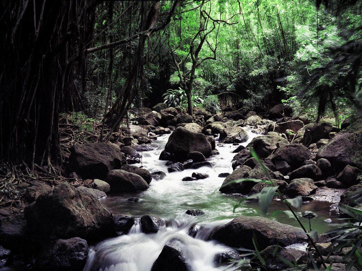 creek for t tropicale papier peint paysage forestier 1200x900 t l chargement. Black Bedroom Furniture Sets. Home Design Ideas
