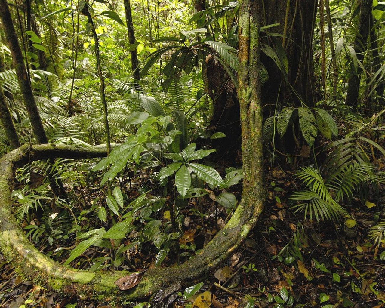 Equateur Parc National Yasuni Wallpaper For 234 T Amazonienne