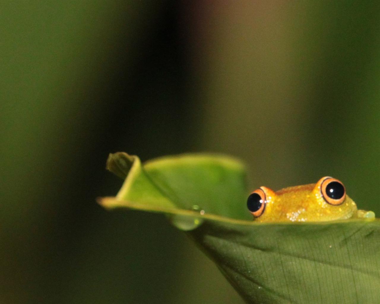 wildlife backgrounds related keywords - photo #10