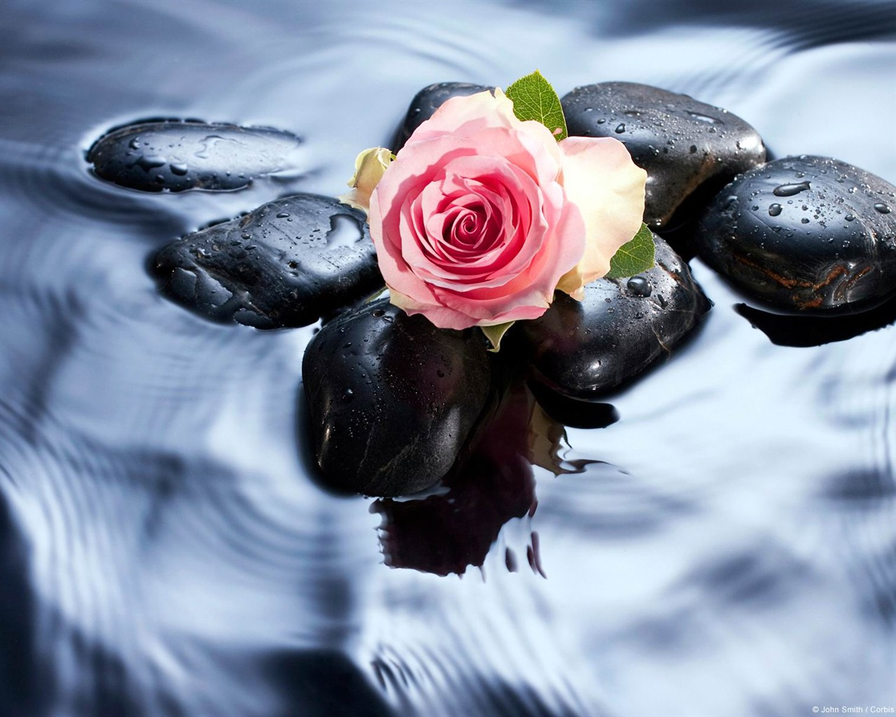 обои на раб стол цветы вода № 635554 бесплатно