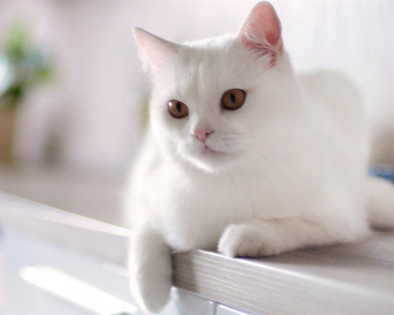 白 猫 いにしえ の 鳥