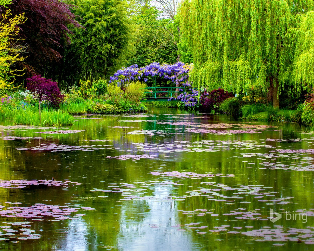 Beautiful Pond Garden-2015 Bing Theme Wallpapers Preview