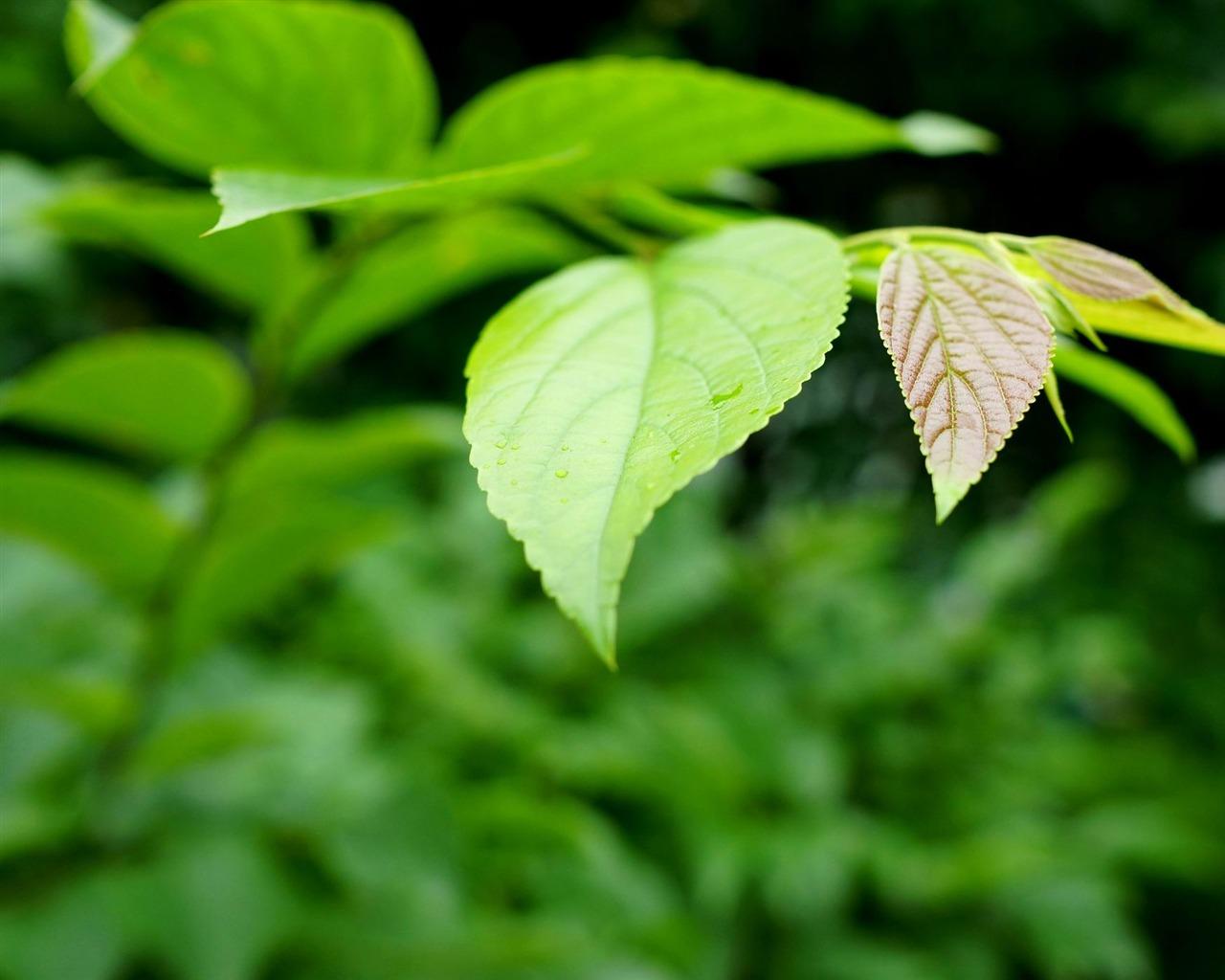 Fresh Green Leaves Hd Plant Desktop Wallpaper 07 Preview 10wallpaper Com
