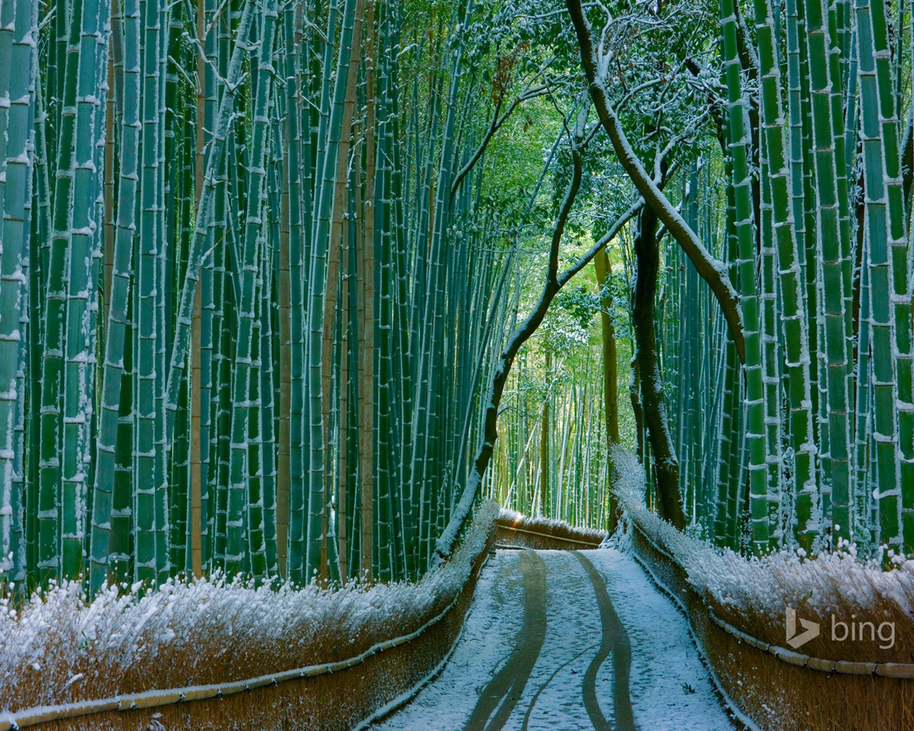 Japan Bamboo Forest Arashiyama 2016 Bing Desktop Wallpaper