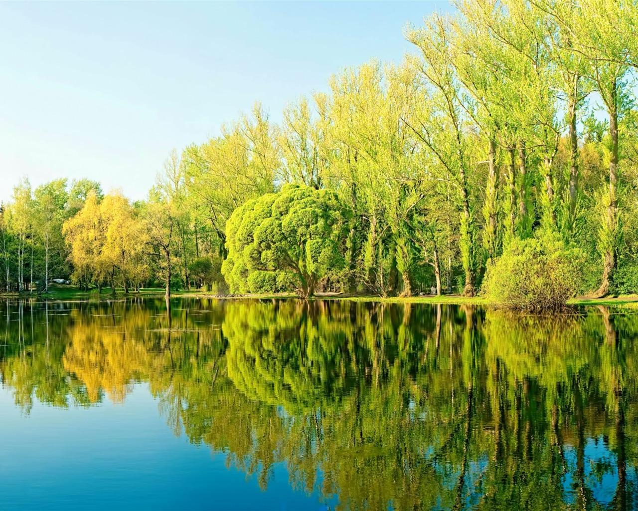 Forest summer sunshine trees lake reflection - 1280x1024 wallpaper download