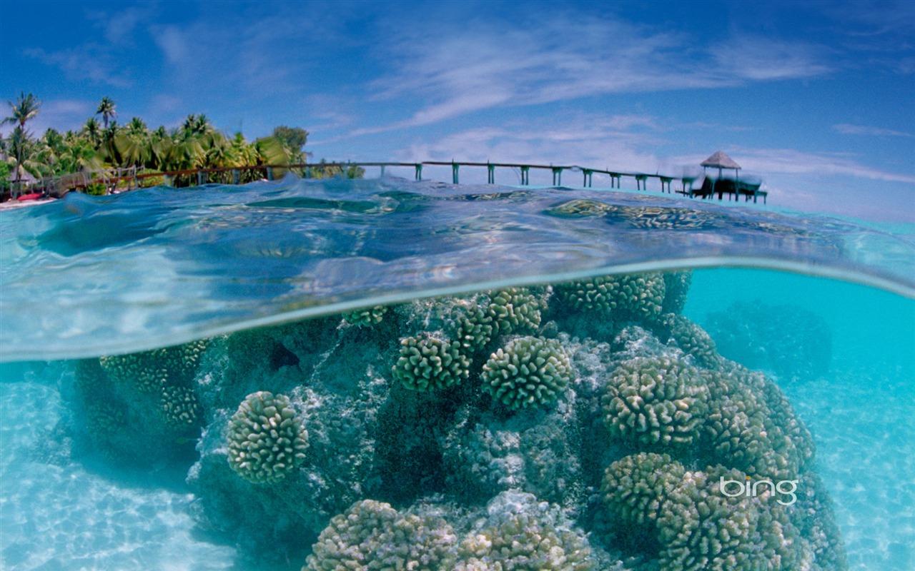 [Image: Fakarava_Atoll_in_the_Tuamotu_Archipelago_1280x800.jpg]