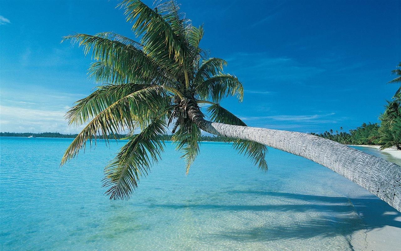 ... palmiers fond d'écran plage - 1280x800 Fond d'écran Télécharger