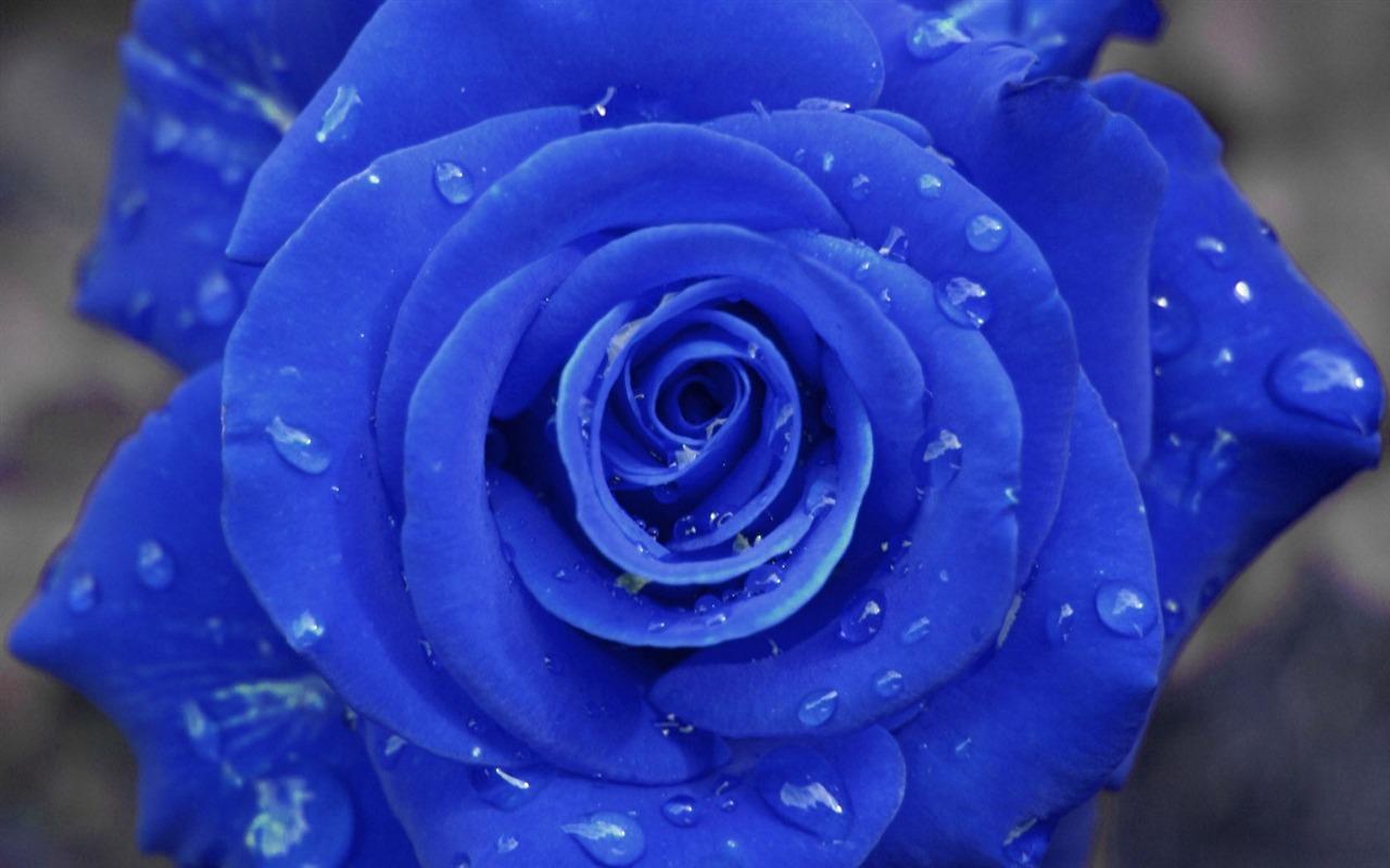 Синии цветы