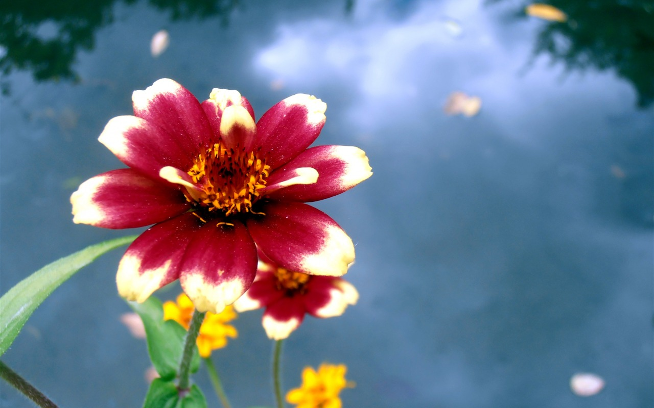 Beautiful images of flowers for desktop
