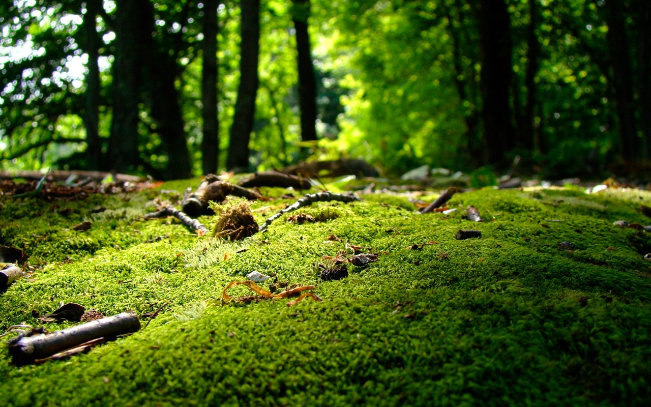 nature forest landscape photo wallpapers preview