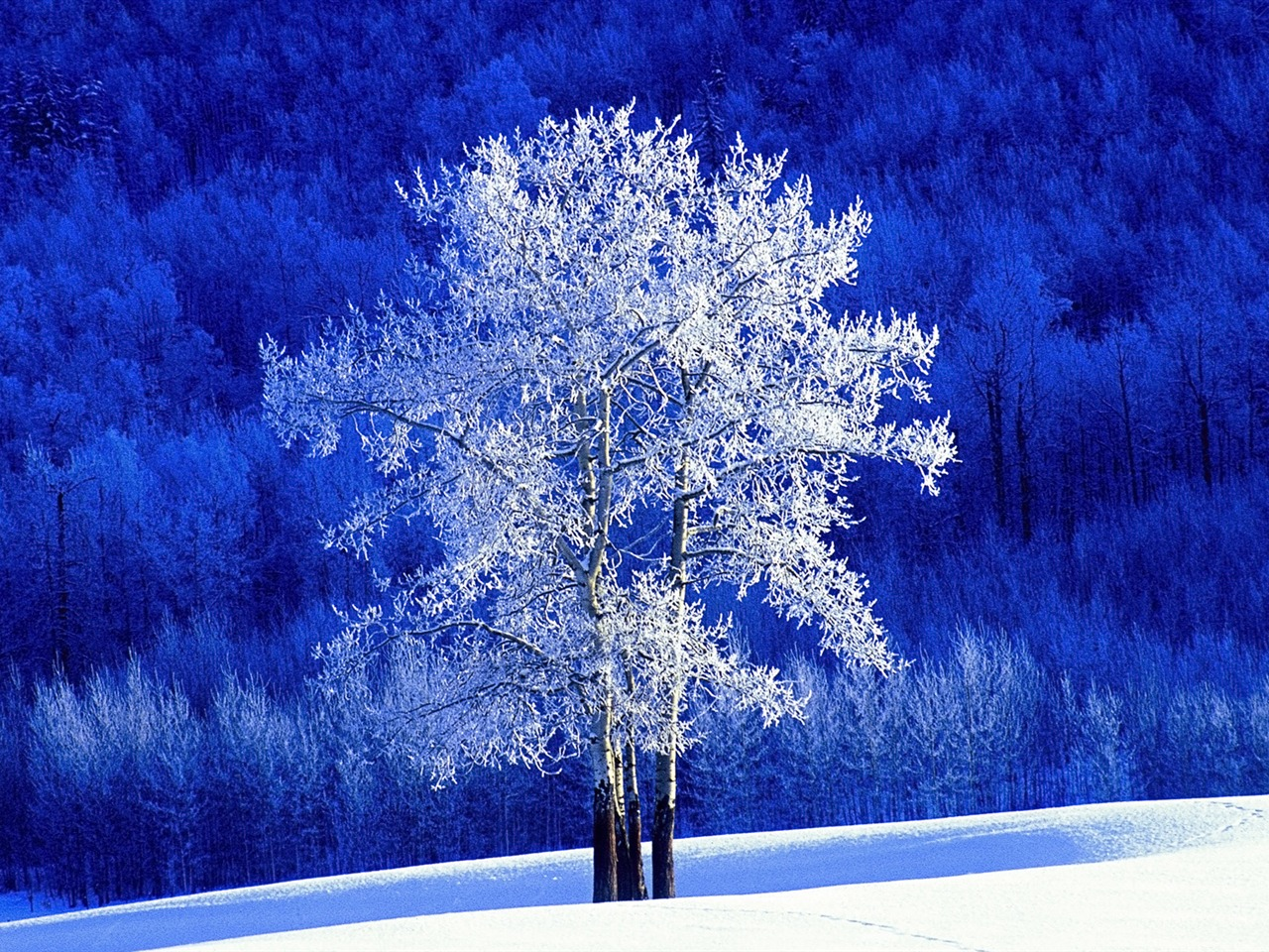BC Canadasnowdesktopwallpaperonthepoplartreesx