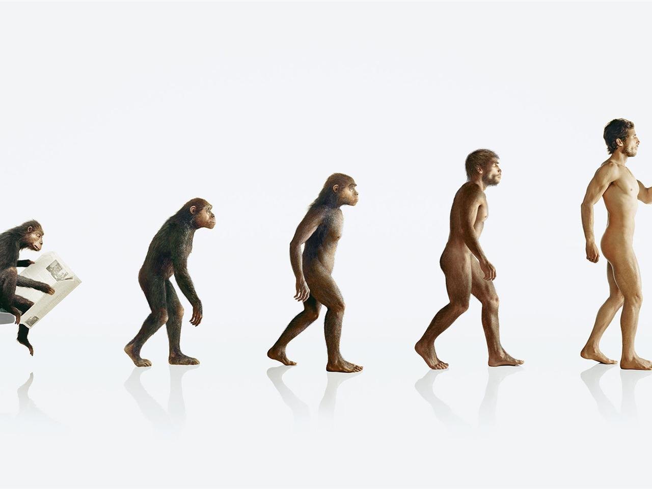 the origin and evolution of twerking essay