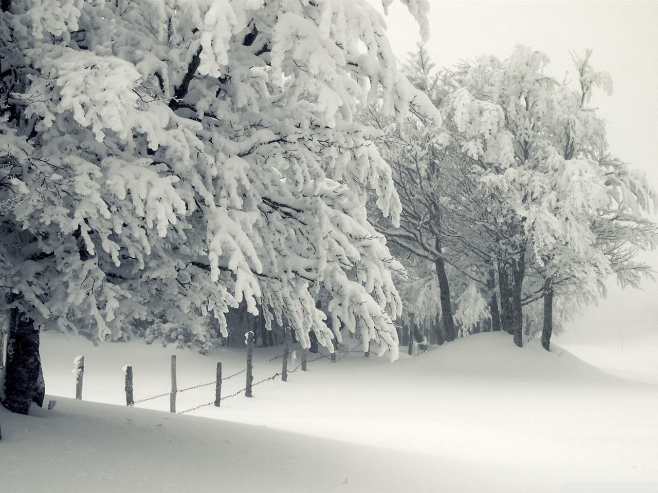 下雪 寒冷的冬季风景桌面图片