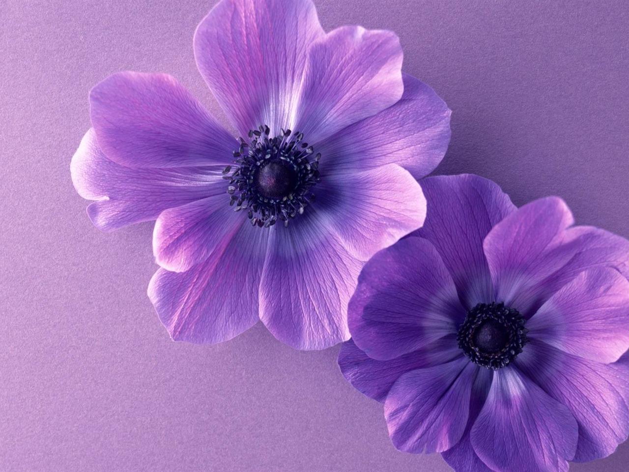 Fondo Primavera álbum Classic Flores Violetas: Dos Flores Violetas-hermosas Flores Picture Wallpaper