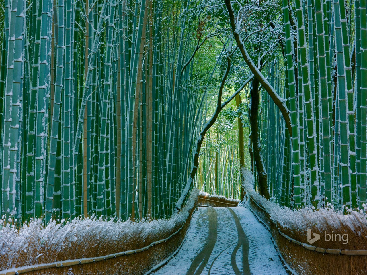 Japan Bamboo Forest Arashiyama 2016 Bing Desktop Wallpaper