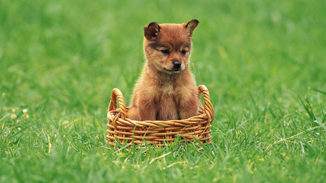 バスケット ラブリー子犬のリトル柴犬の子犬プレビュー