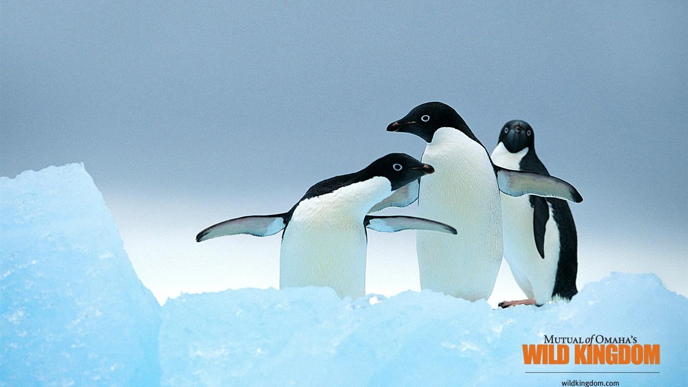 ペンギンの壁紙プレビュー 10wallpaper Com