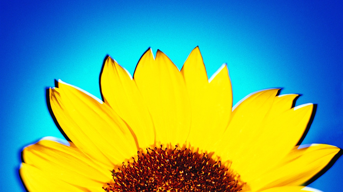 Girasol - Summer Still Life Photography logotipo 01