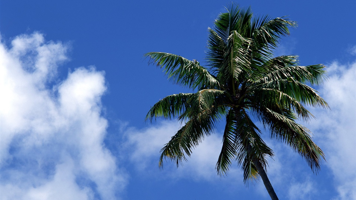 coconut_trees_under_the_blue_sky_wallpaper