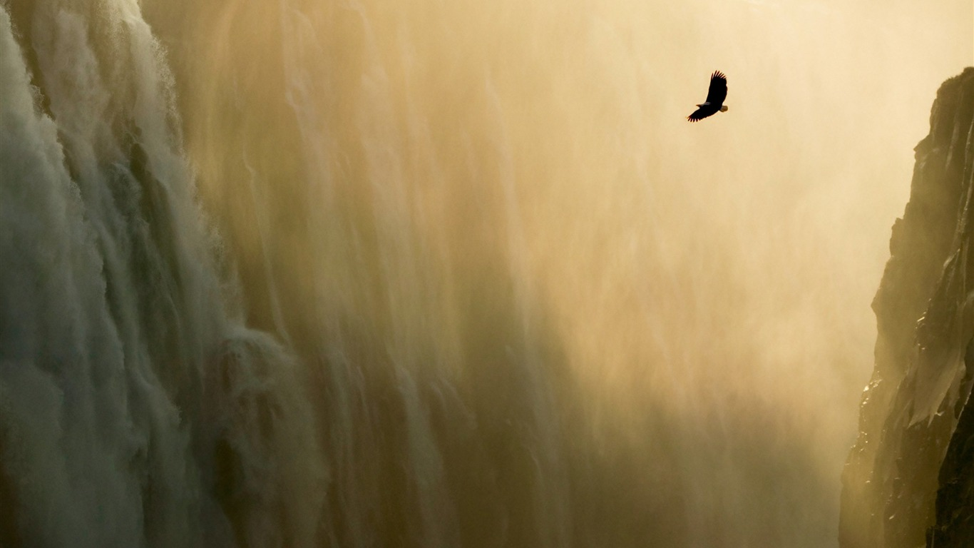 Eagle_and_Waterfall_Wallpaper