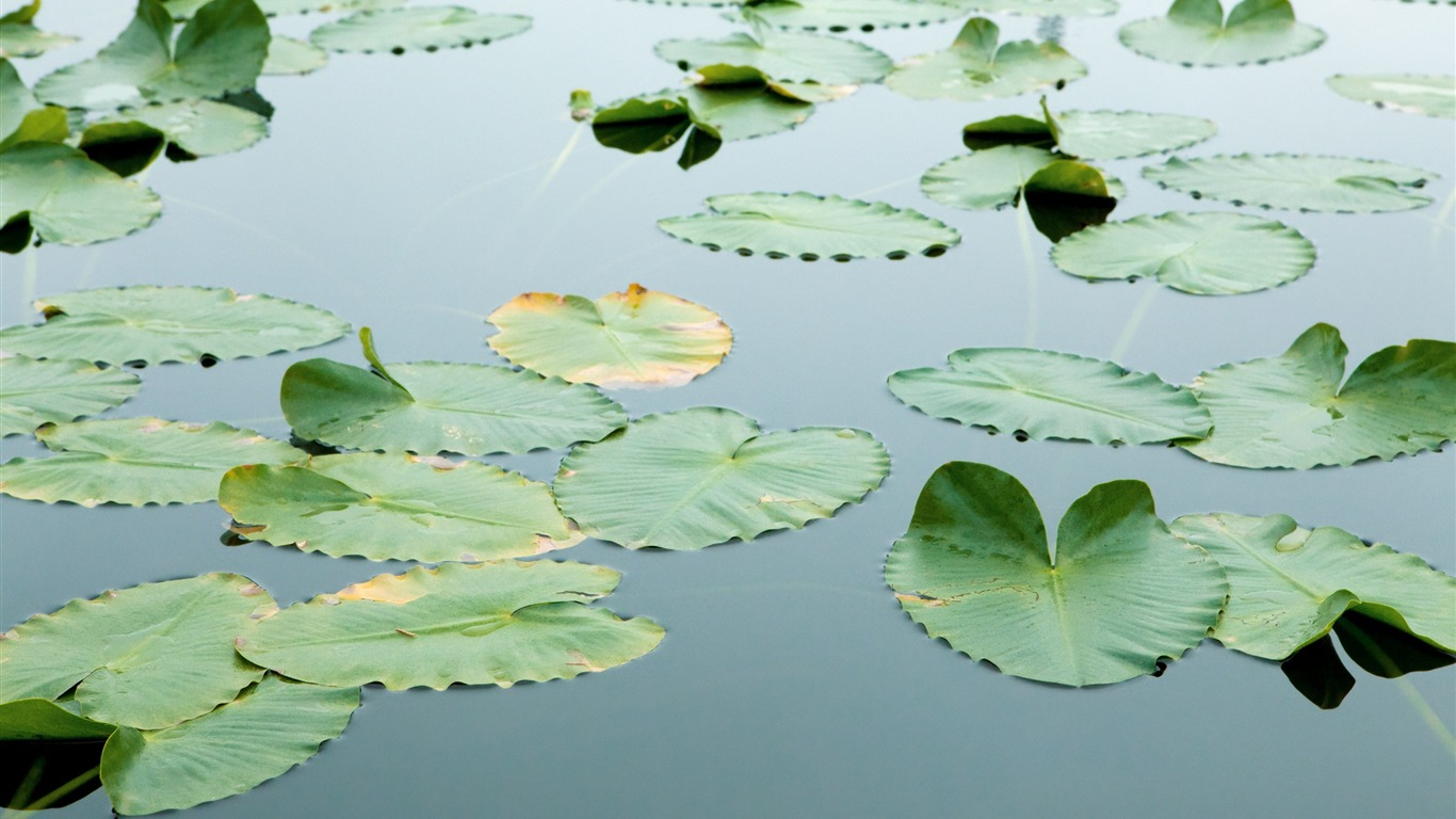 Floating_Leaves_Wallpaper