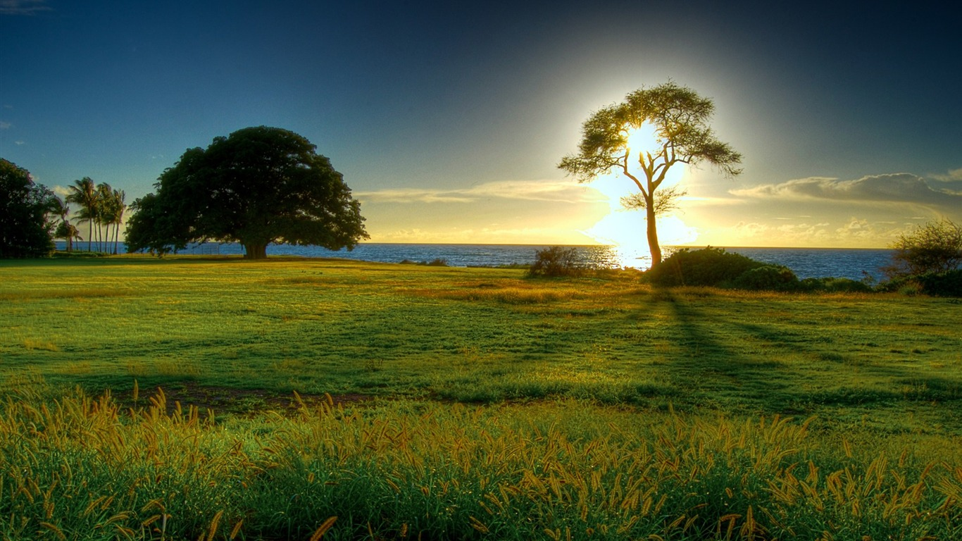Sunrise Tree-the worlds natural landscape photography ...