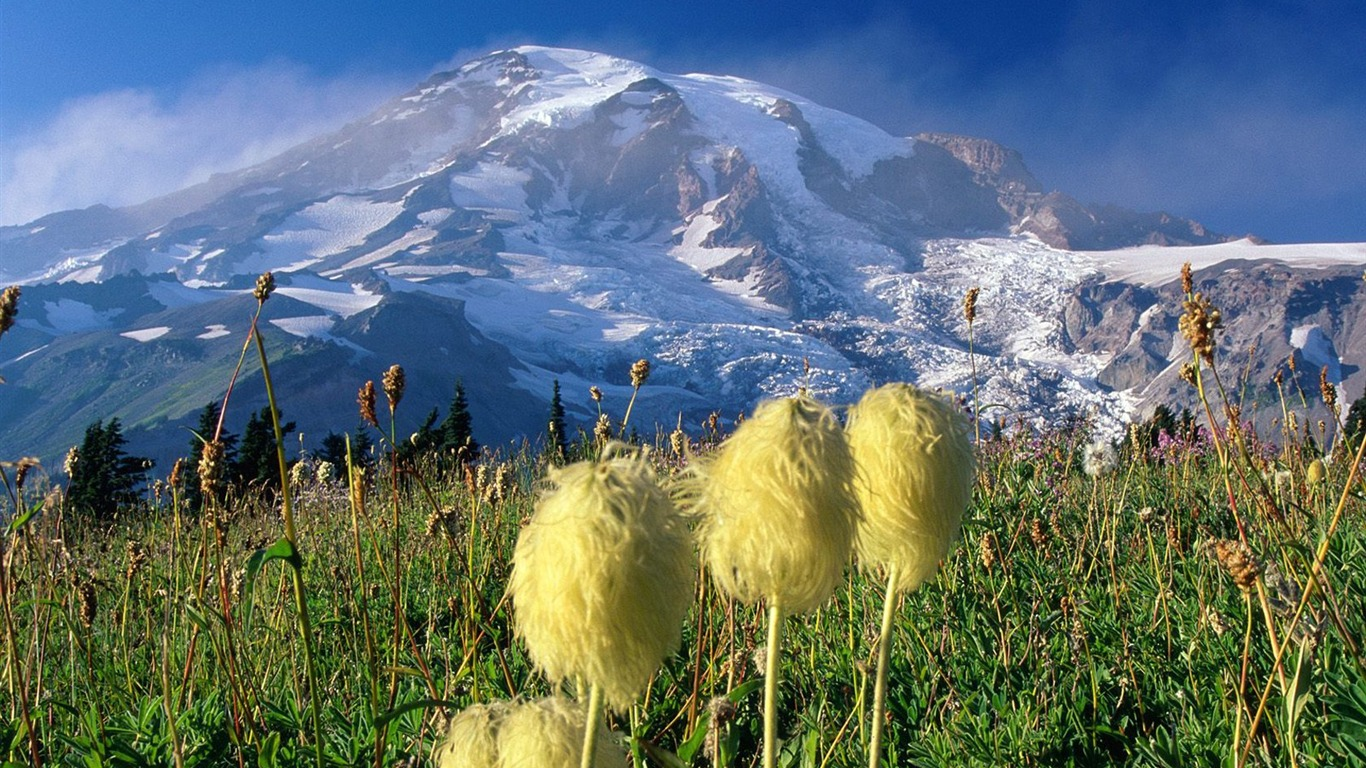 Washington-_Mount_Rainier_National_Park_Wallpaper