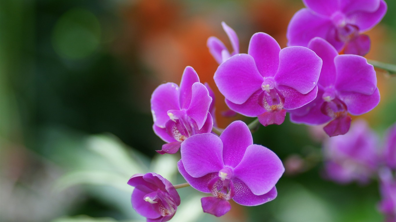 charming flowers-flower picture flower market 04-1366x768 ... - photo#13
