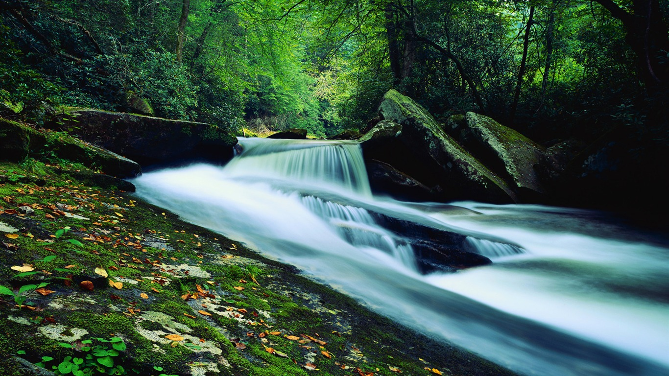 green_forest_streams_Wallpapers