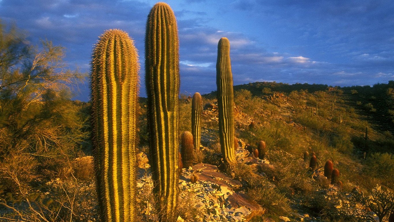 Arizona - South Mountain Park Cactus Wallpaper