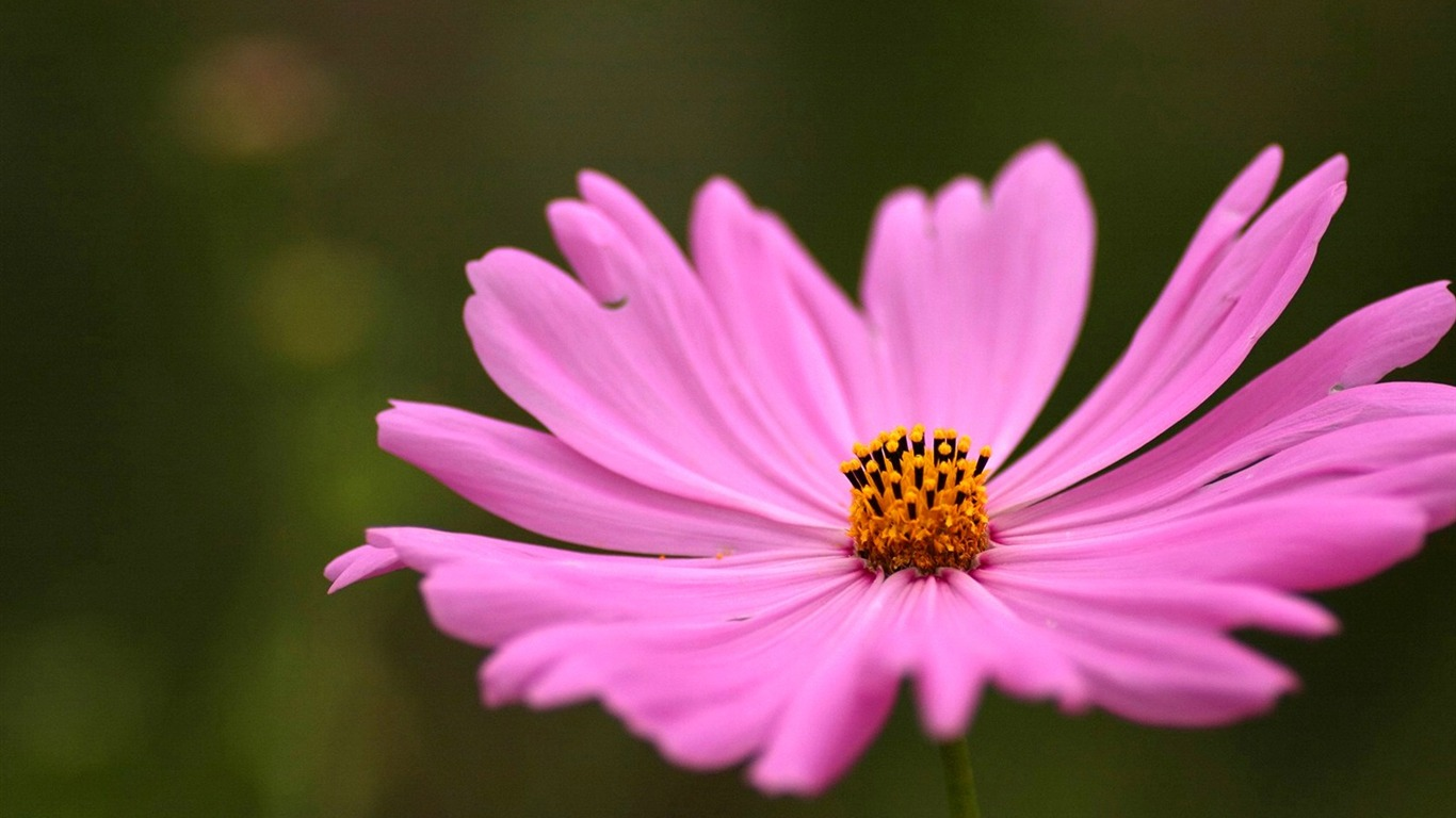 Autumn_flowers-grass_in_the_cosmos_Wallpaper_242011.8.23