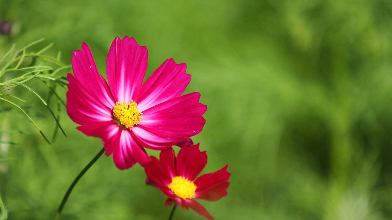Autumn_flowers-grass_in_the_cosmos_Wallpaper_292011.8.23