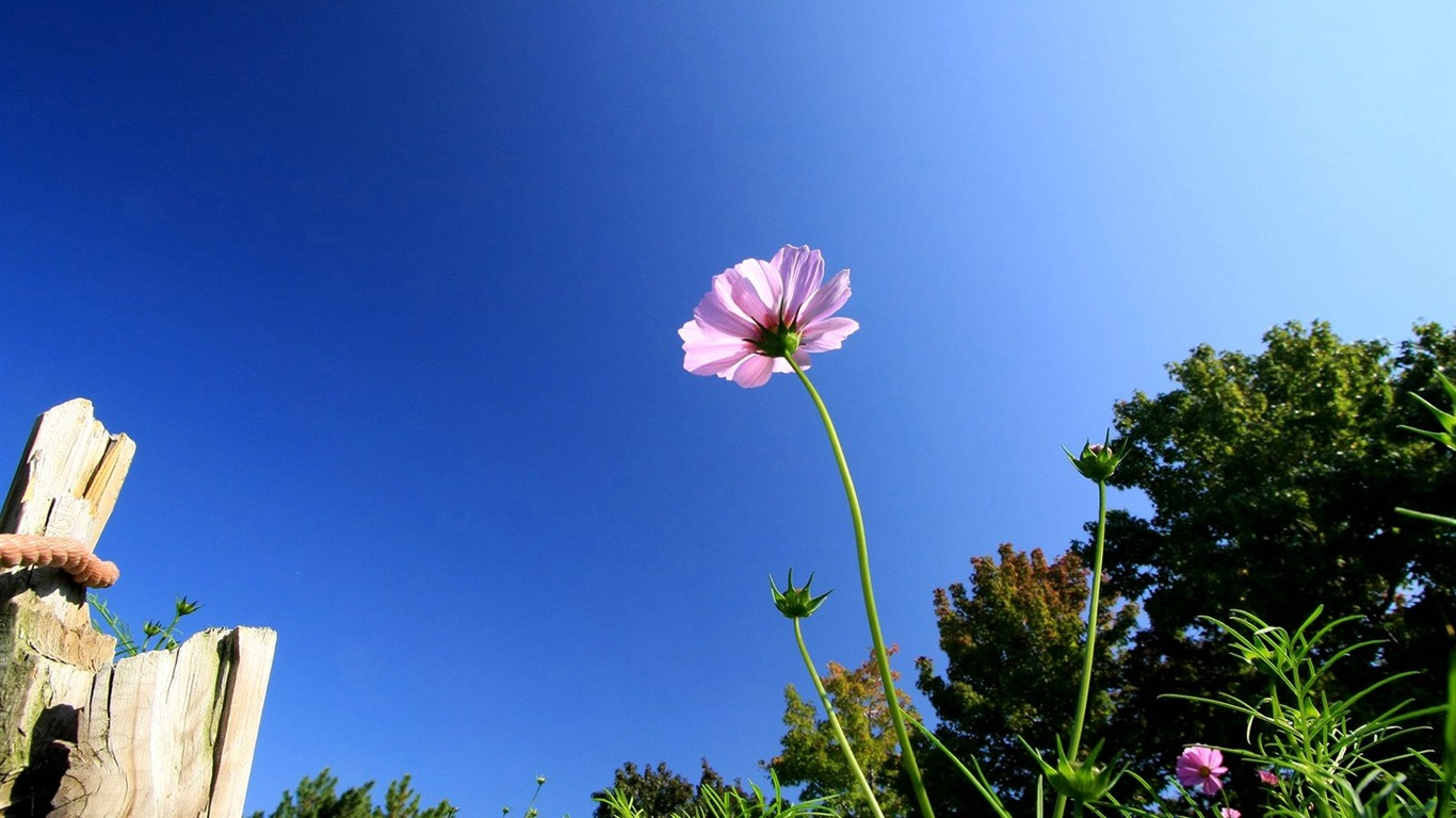Autumn_flowers-grass_in_the_cosmos_Wallpaper_342011.8.23