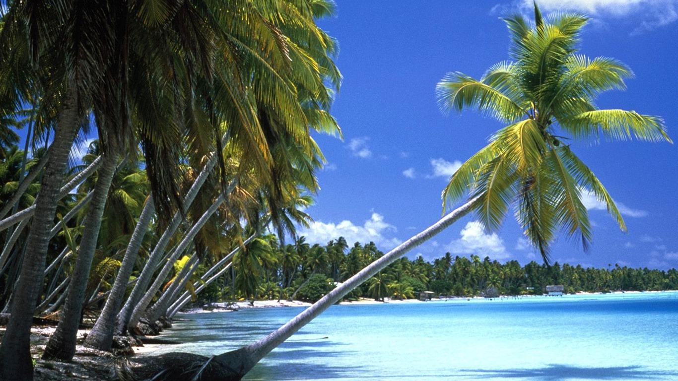 Tahiti Palmiers Fond D Ecran Apercu 10wallpaper Com