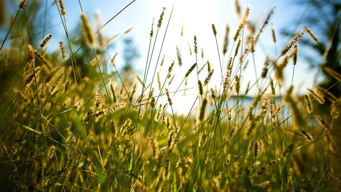 Wild grass alternative landscape photography view for Wild grass landscaping