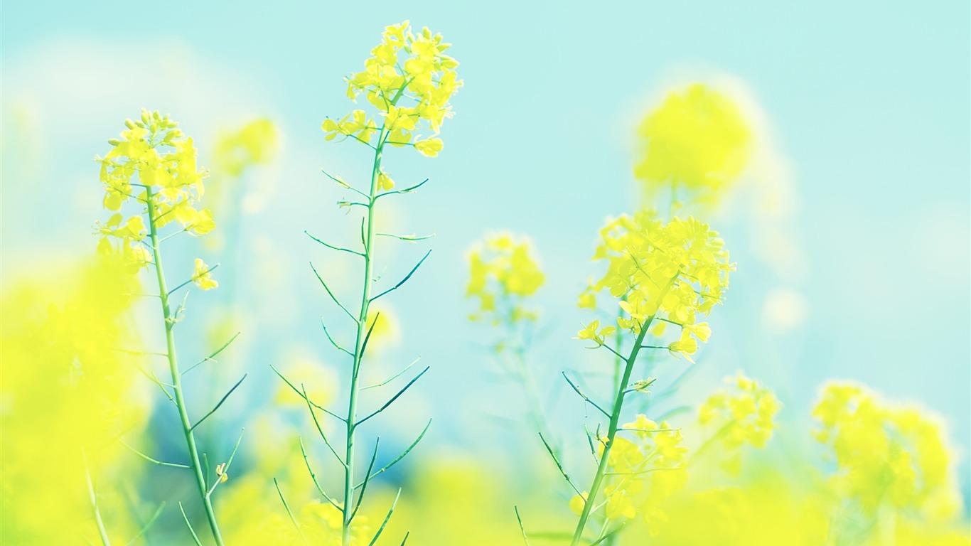 明るい黄色の菜の花の壁紙プレビュー 10wallpaper Com