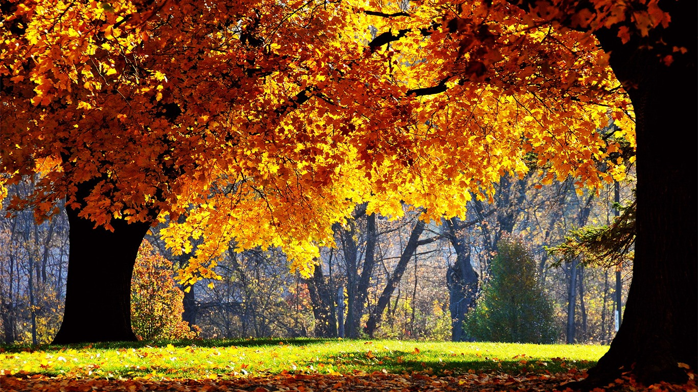 Autumn_maple_forest-_Autumn_Landscape_wallpaper2011.9.10