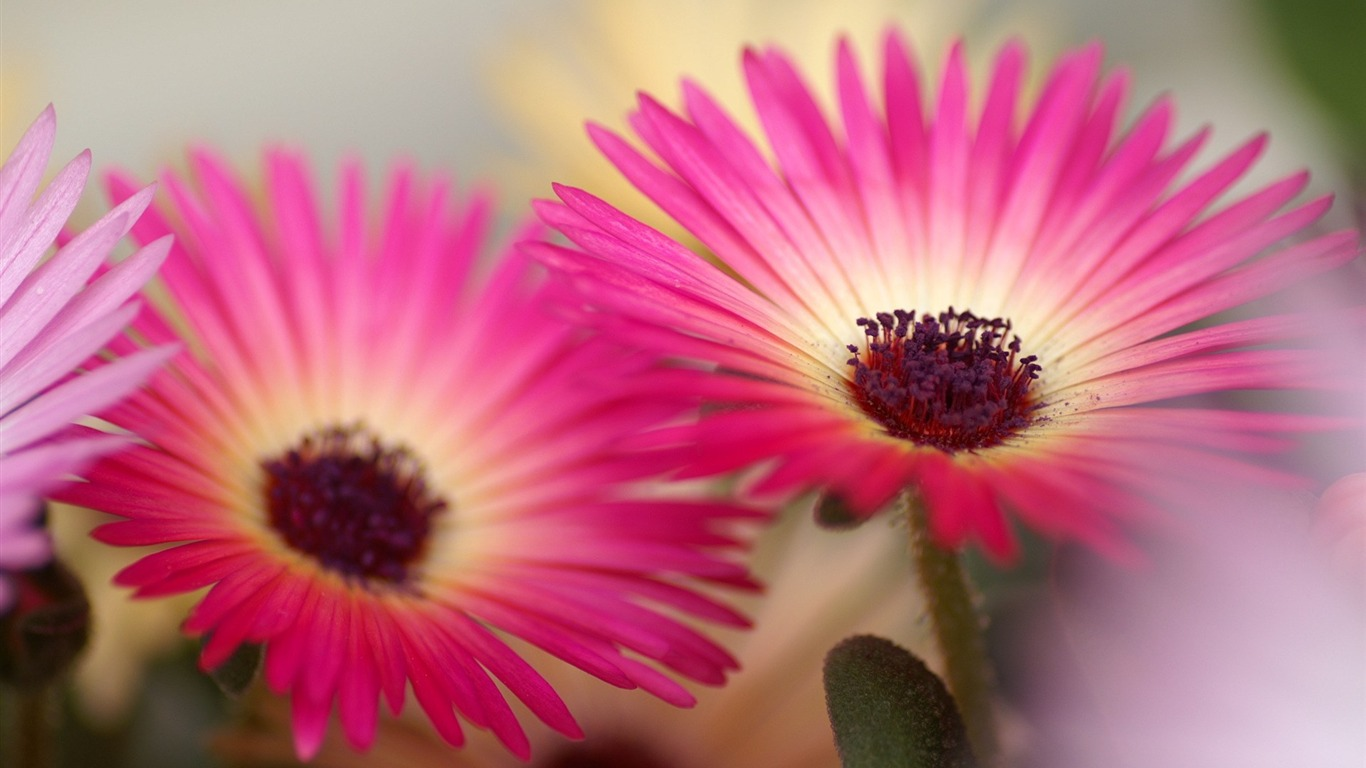 Hd Flower Photography All Hd Wallpapers