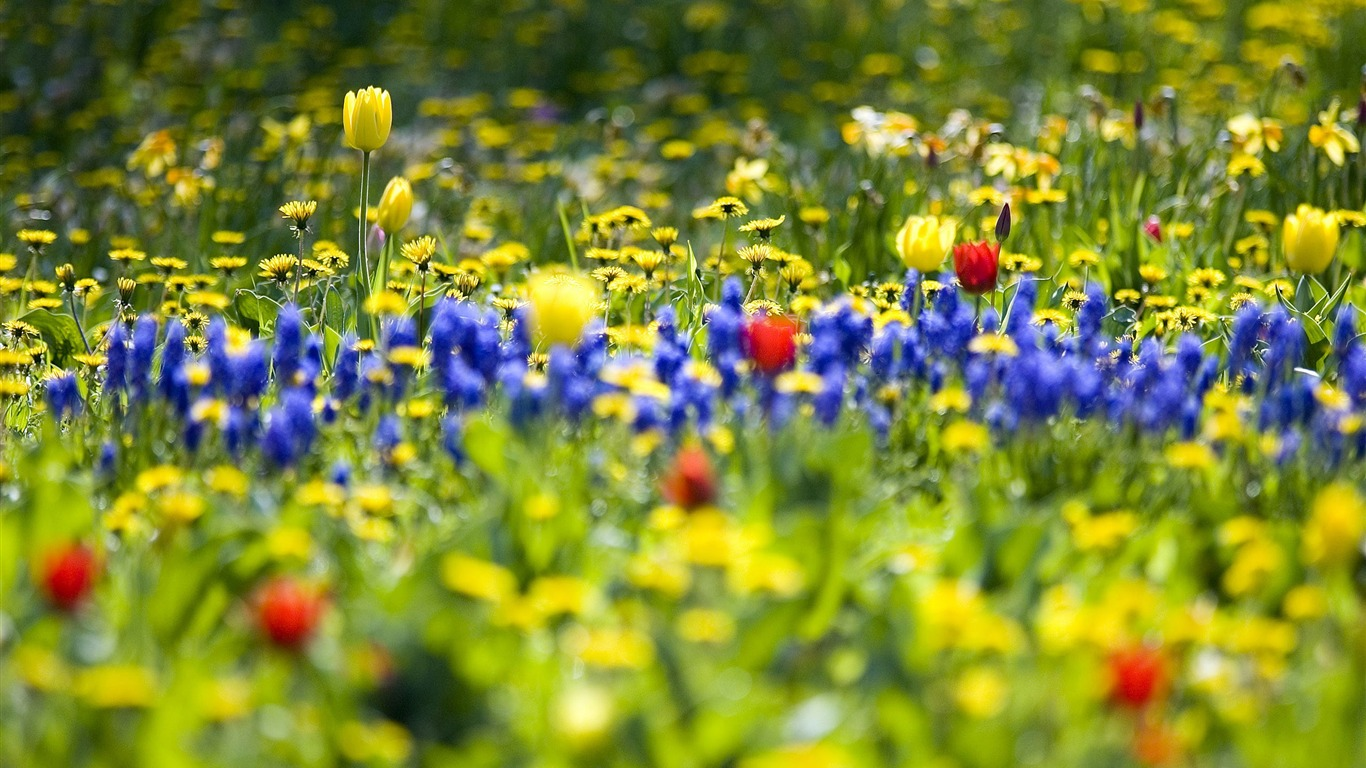 Spring_wildflowers_bloom-Nature_Landscape_wallpaper_selected2011.9.28