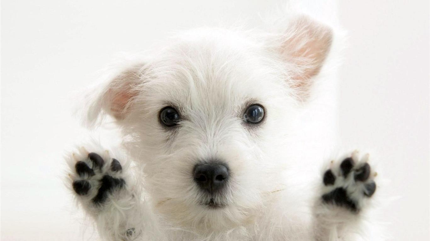 非常にかわいい犬 動物の世界シリーズ壁紙プレビュー 10wallpaper Com