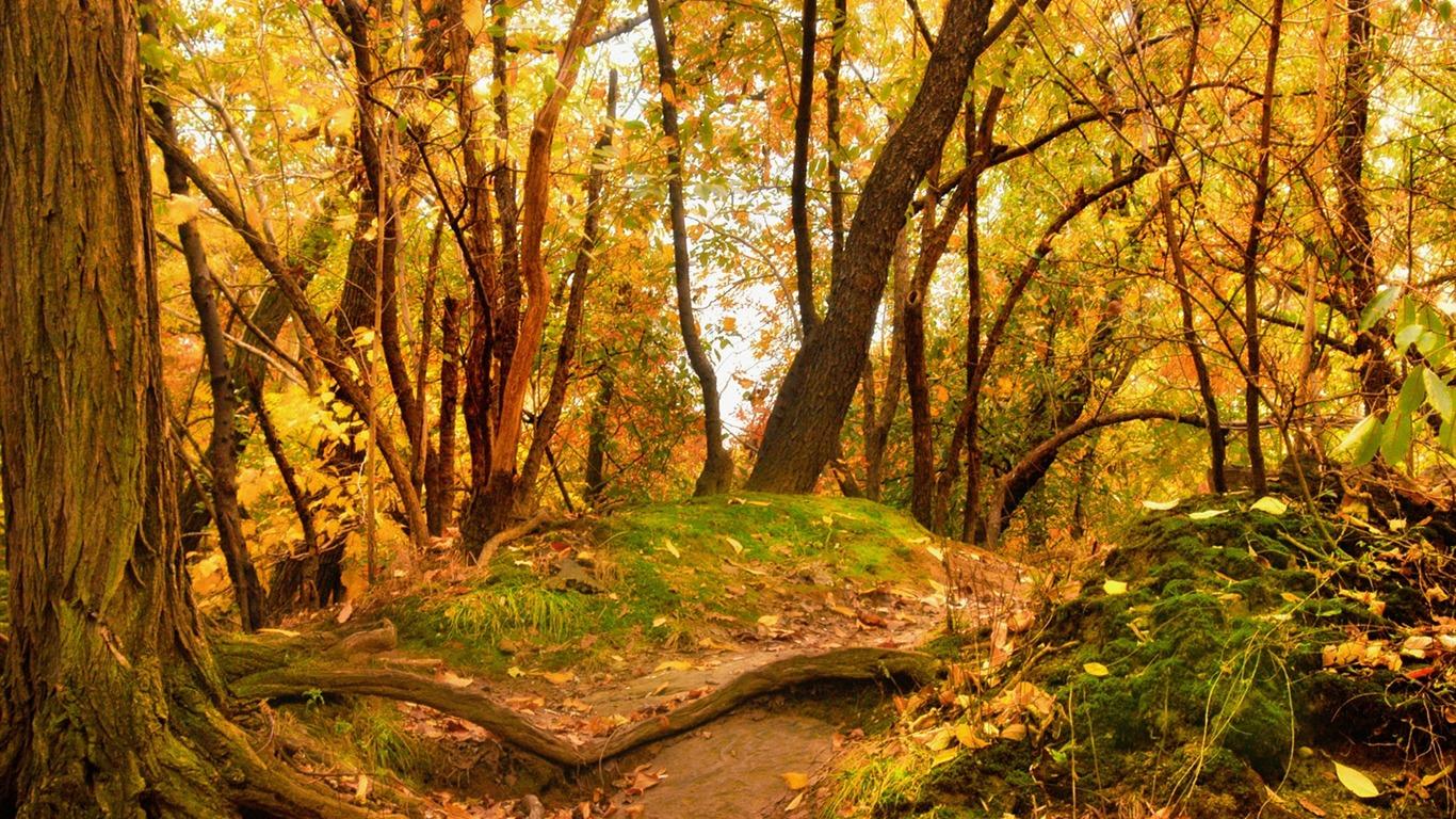 NOËL 2018 (Images, photos, paysages de fête) View_of_the_woods_in_autumn-_Autumn_Landscape_wallpaper_1366x768