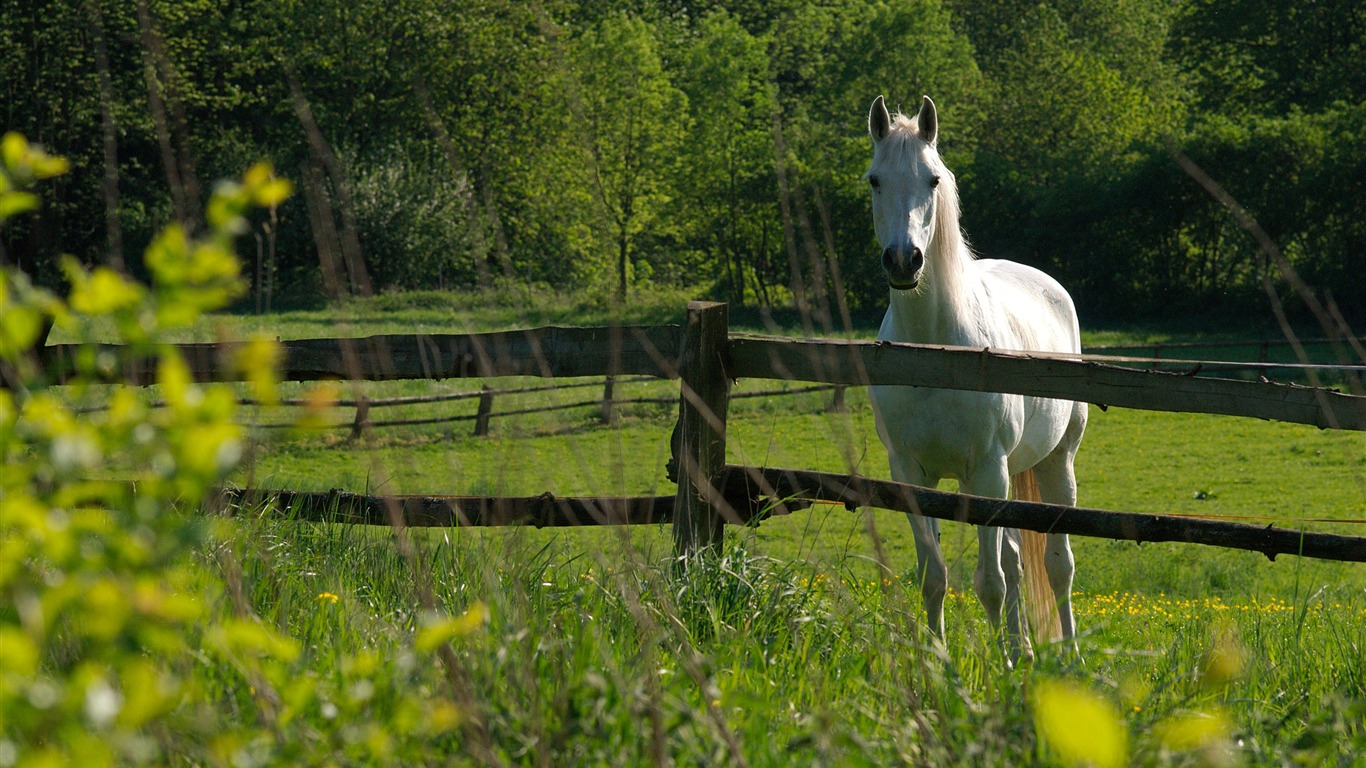 White_Horse-Nature_Landscape_wallpaper_selected2011.9.28