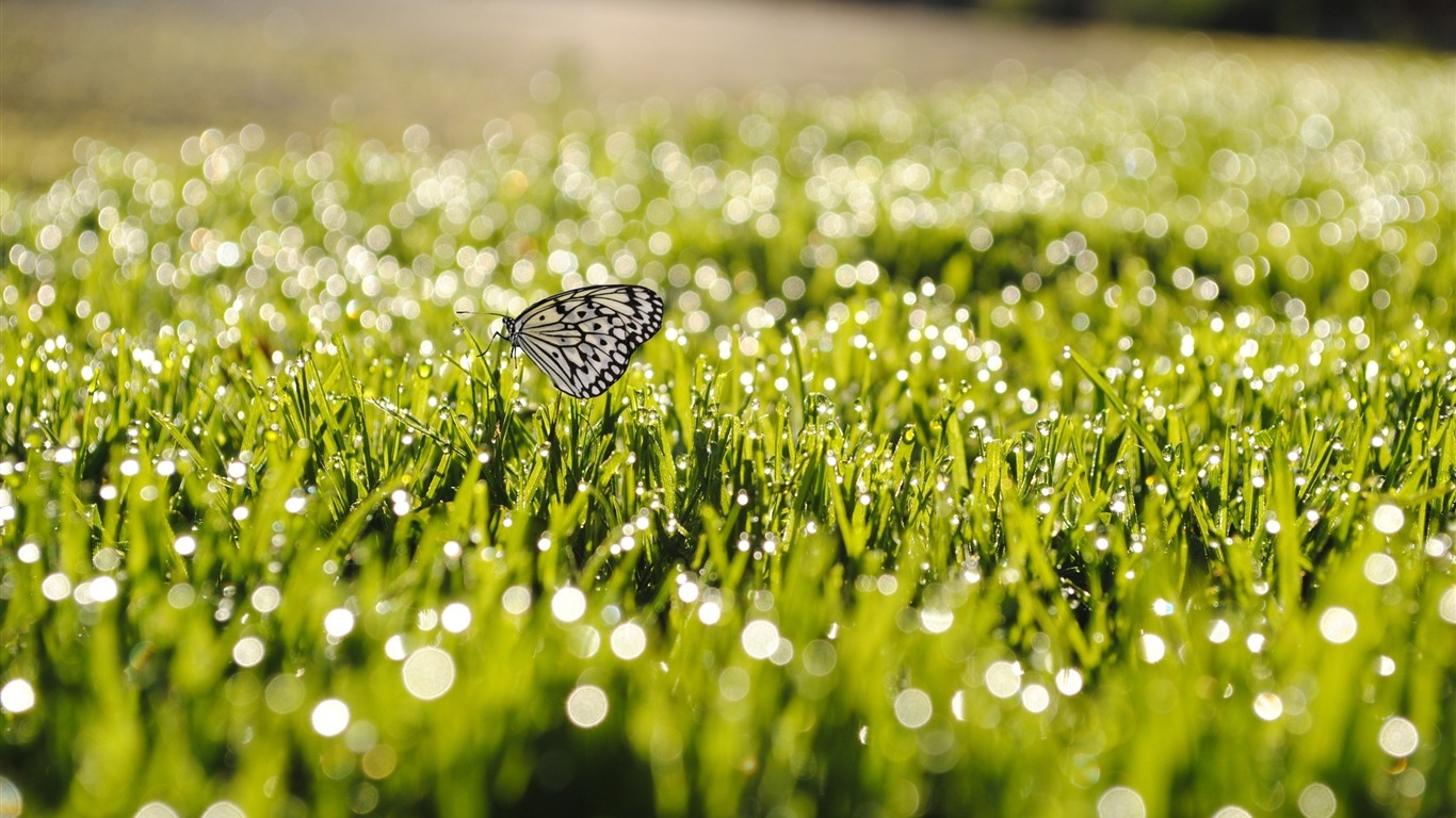 on_grass-beautiful_butterfly_-_Desktop_Wallpaper_Album2011.10.11