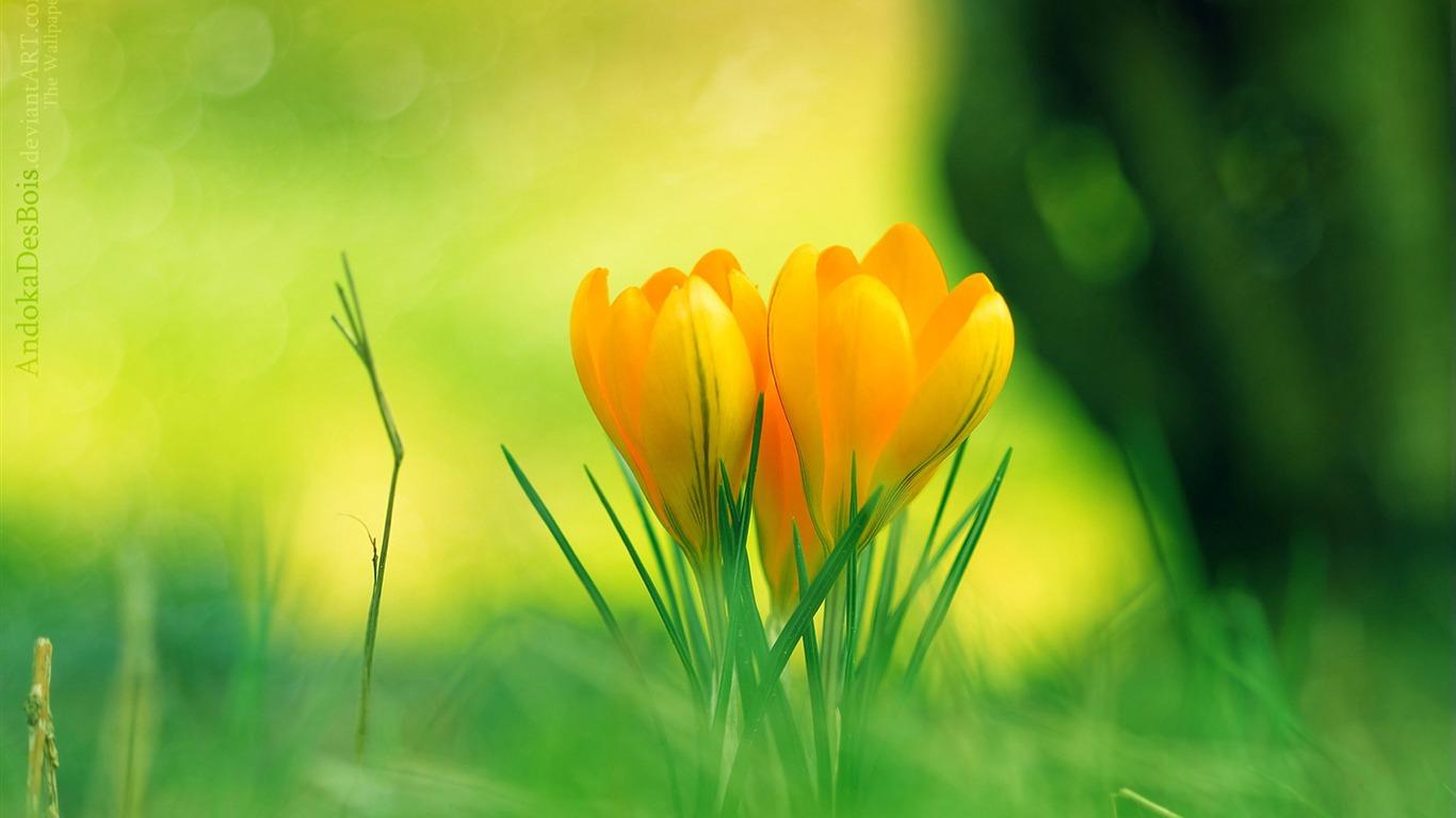 黄色のクロッカスの花 春の壁紙アルバムプレビュー 10wallpaper Com